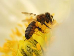 蜂蜜含有哪些营养成分?