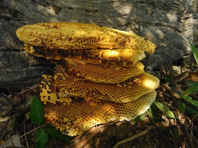 【2013视频】晒好的纯正野生蜂蜜装箱,还有很古老的称哦。-宣明野生蜂蜜