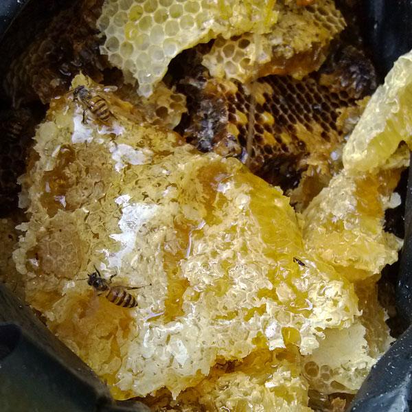 蜂巢蜜怎么吃|蜂巢蜜的作用与功效