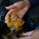 山东济南|烟台|青岛|潍坊天然野生蜂蜜 极品土蜂蜜保健美容首选品