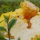 四川成都|南充|乐山|重庆天然野生蜂蜜岩蜂蜜蜂巢蜜